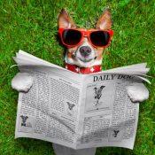 https://depositphotos.com/48267109/stock-photo-dog-reading-newspaper.html