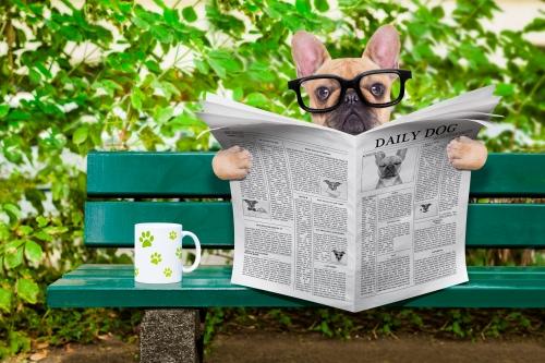 https://depositphotos.com/80038942/stock-photo-dog-reading-newspaper.html