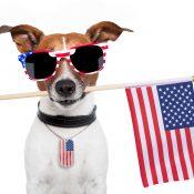 https://depositphotos.com/11078435/stock-photo-american-dog.html