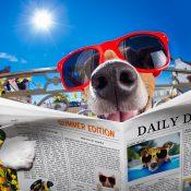 https://depositphotos.com/121268514/stock-photo-crazy-silly-dumb-dog-fisheye.html