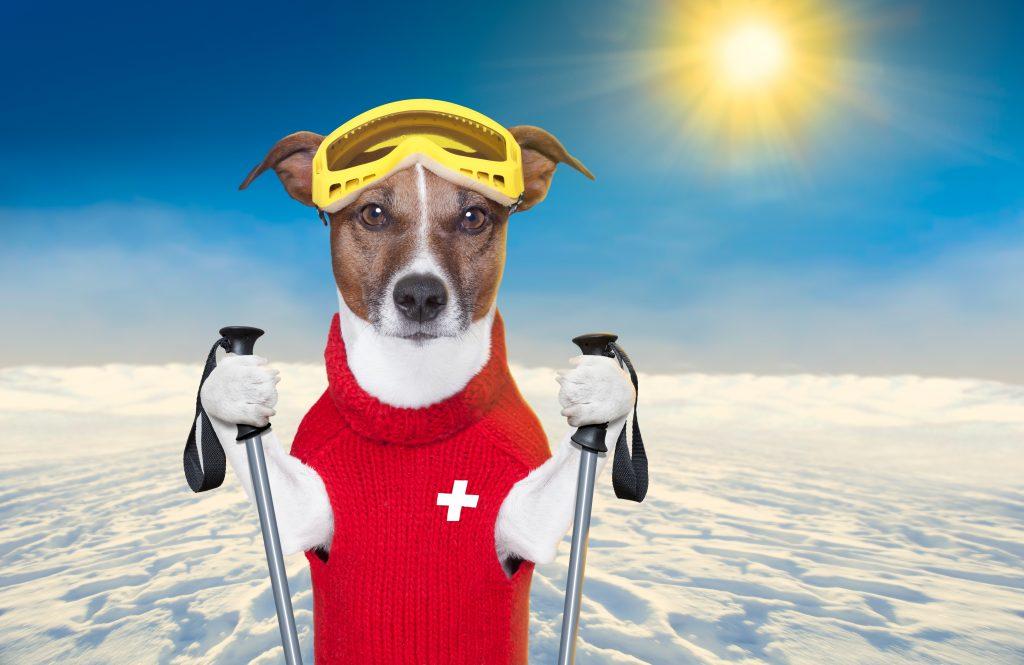 Barks and Bites - https://depositphotos.com/17158459/stock-photo-skiing-dog.html