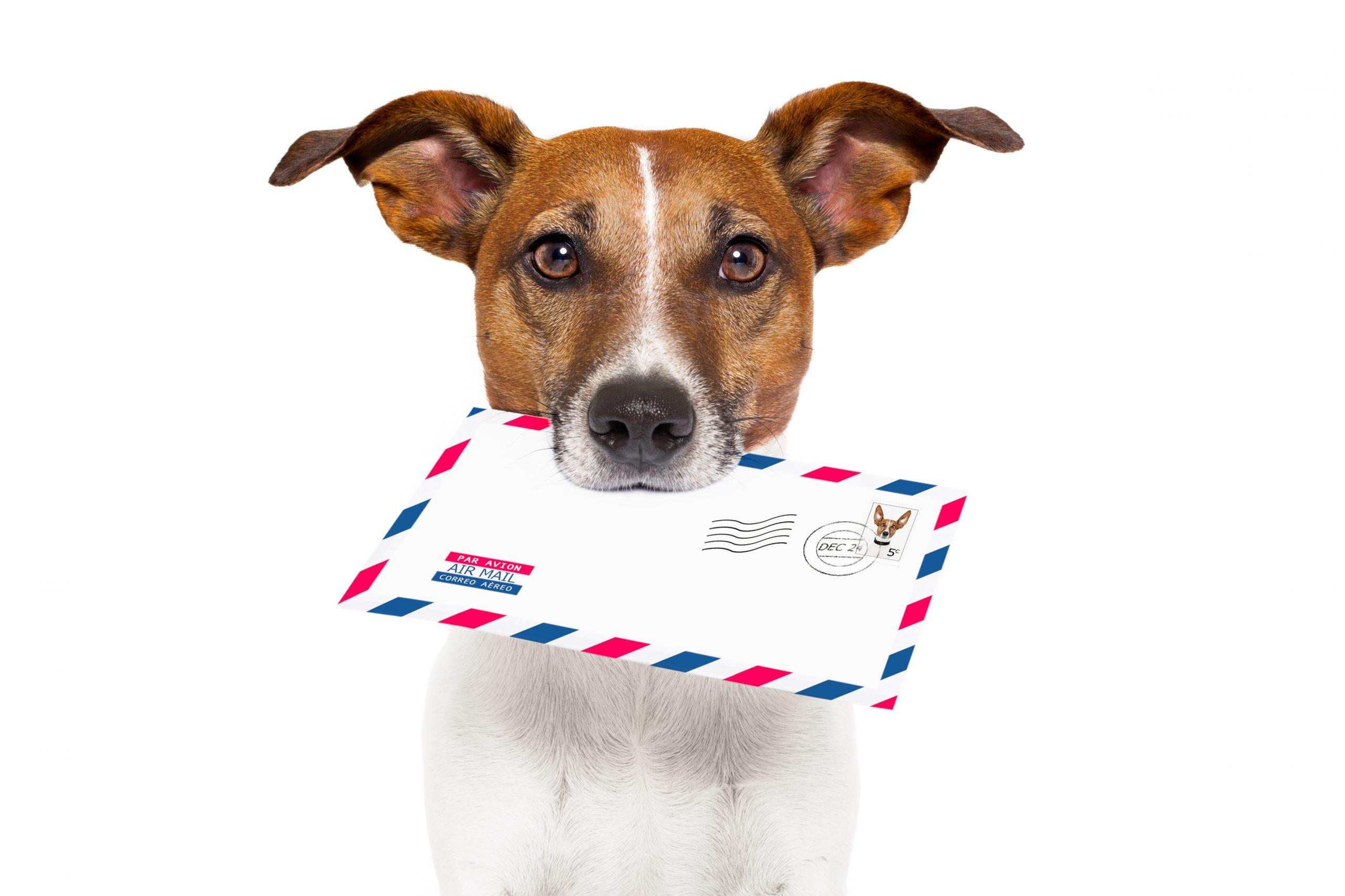 patent eligibility letter - https://depositphotos.com/11492323/stock-photo-mail-dog.html
