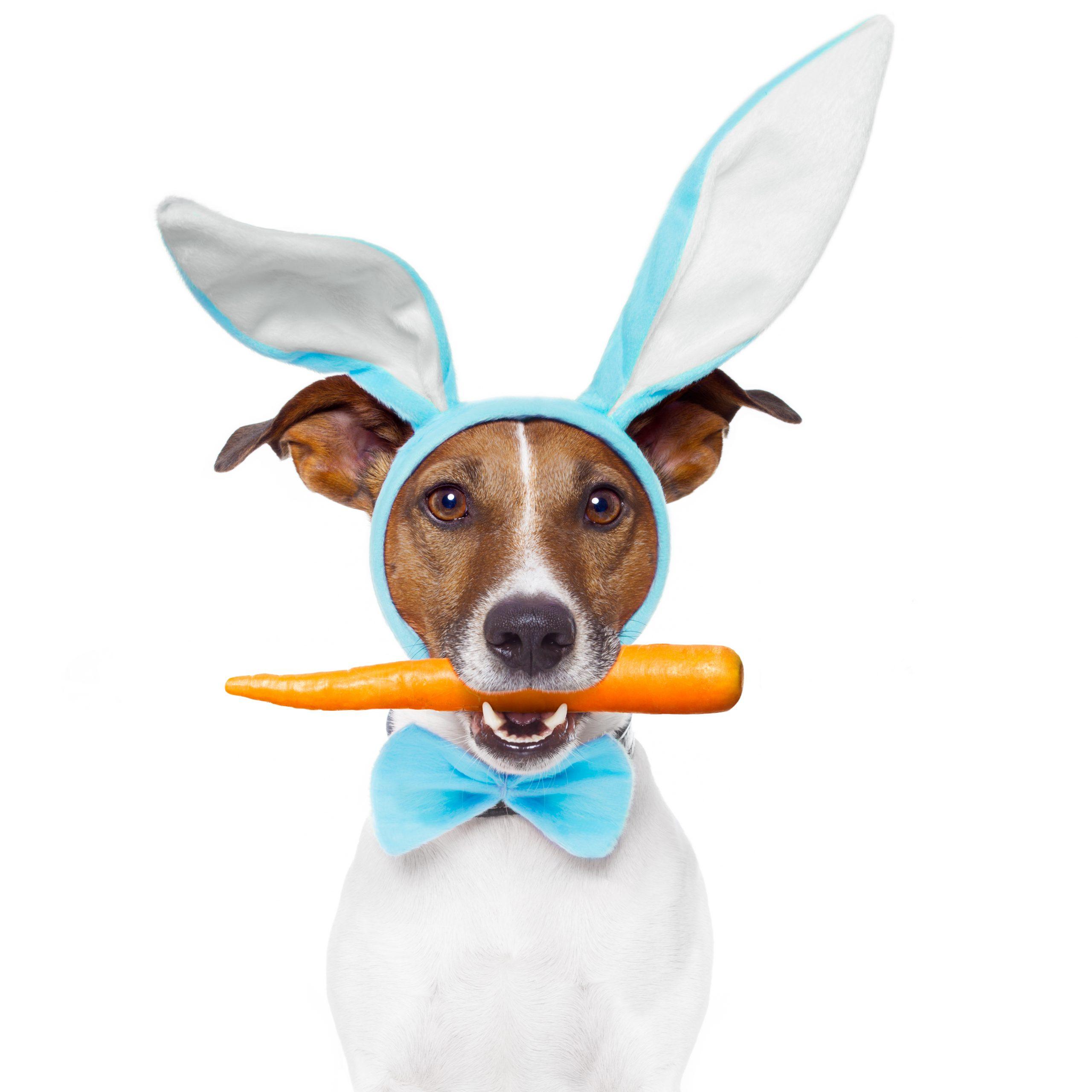 https://depositphotos.com/9681152/stock-photo-dog-with-bunny-ears-and.html